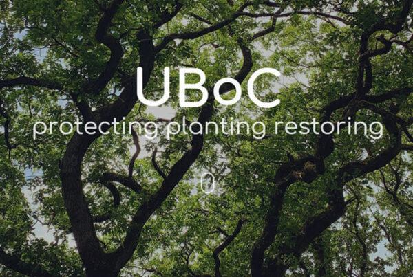 web design screenshot - photo of inside a forest
